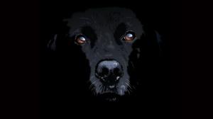 dog black4