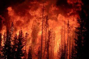 wild fire2