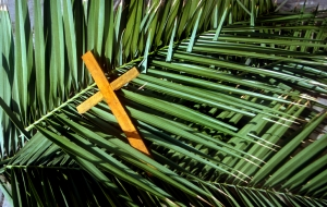 Cross palms